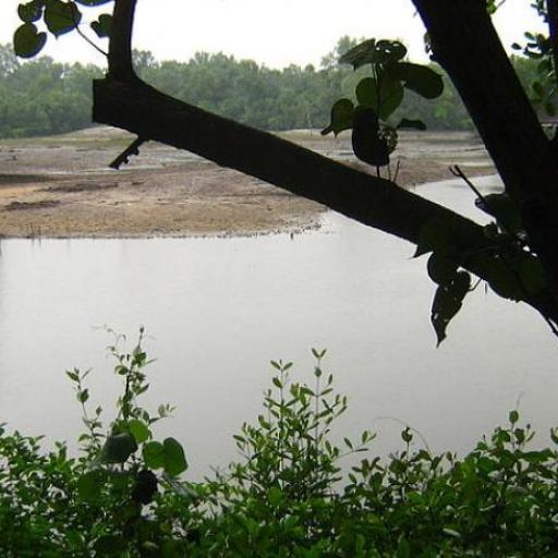 Sungei Buloh Wetland