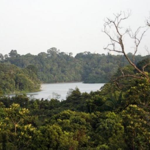 Central Catchment Nature