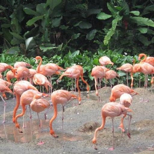 Parc d'Oiseaux de Jurong