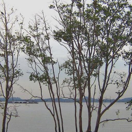 Pasir Ris Park