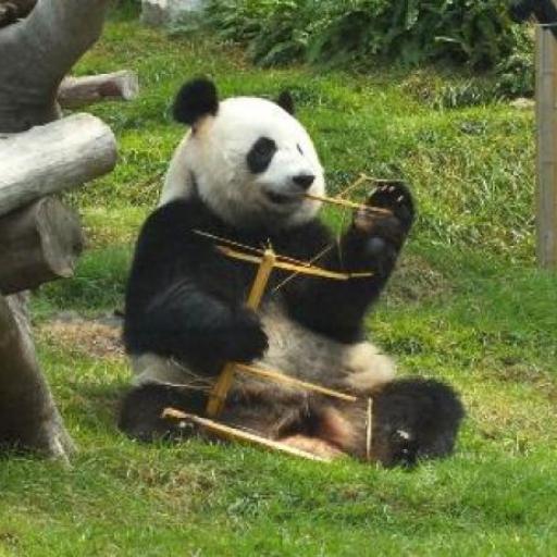 Padiglione del Panda