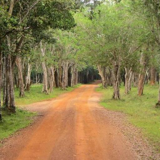 Wilpattu National Park