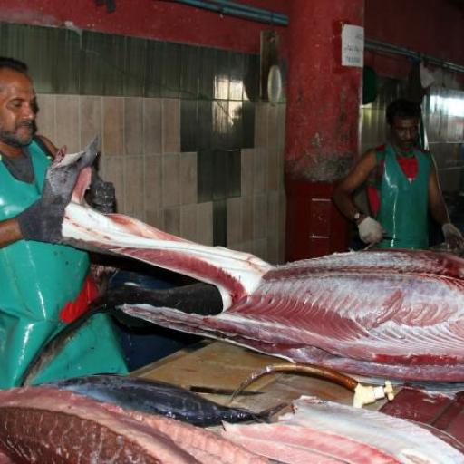 Fish Market- Maldives