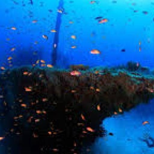Wreck Dive Maldives Victo