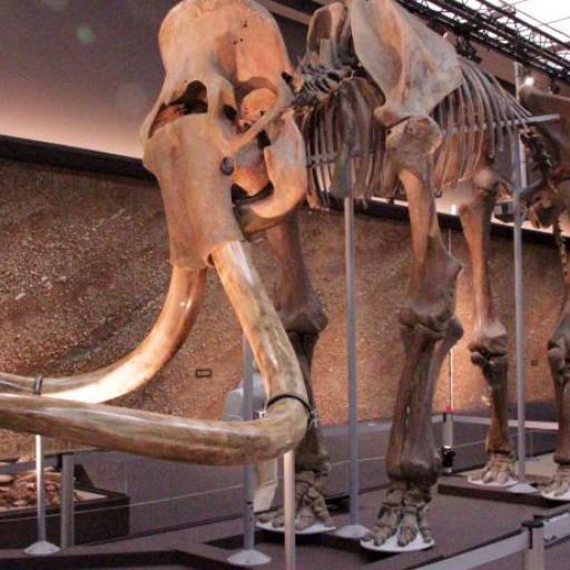 Museum of Prehistoric Ant